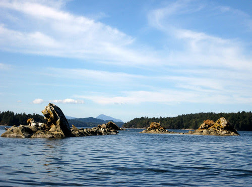 Seals and rocks, off Wallace Island