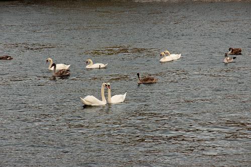 43 av 365 - Flock by Yvonne L Sweden