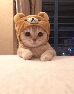 Kucing Lucu Twitter