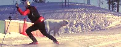 Viral video of a cross country skier meeting a polar bear (Y!