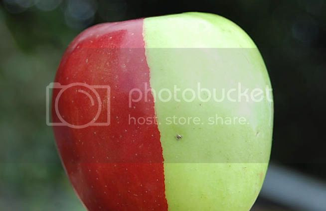buah apple yang hanya satu didunia dunia unik