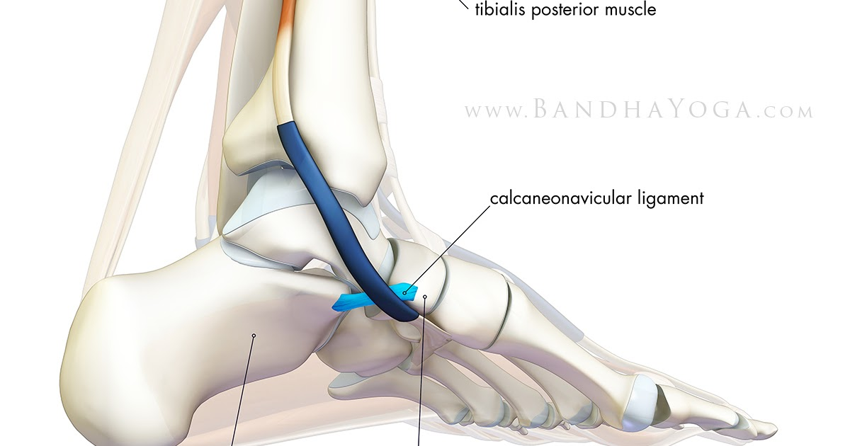 The Daily Bandha Connecting To Your Feet In Yoga