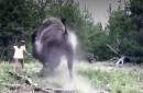 Florida girl, 9, attacked by bison at Yellowstone National Park