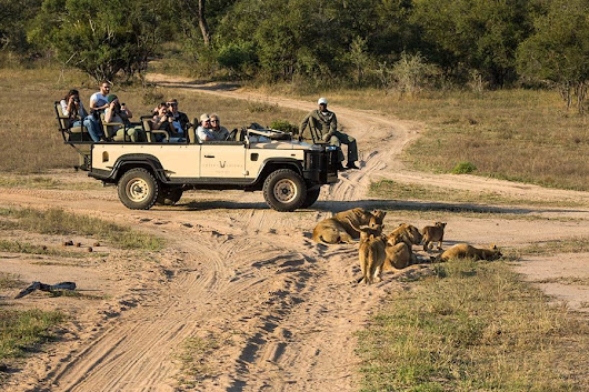 Sabi Sands blog & news |   A change of seasons in the bush