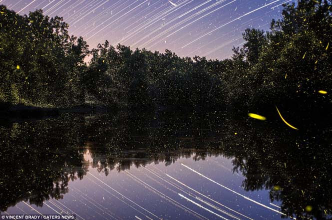 Εκπληκτικές εικόνες με πυγολαμπίδες (1)