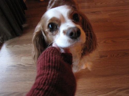 Puddles, do you like cashmere?