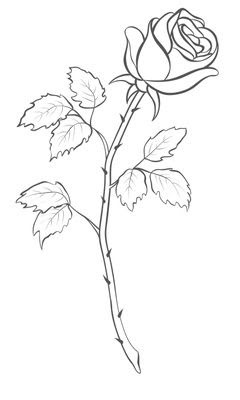 The Best Free Rose Tattoo Drawing Images Download From 50 Free