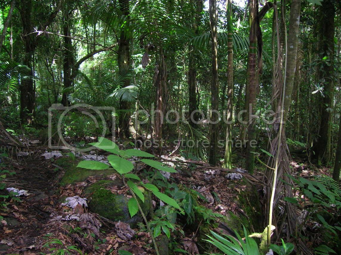 Caribbean National Forest Image