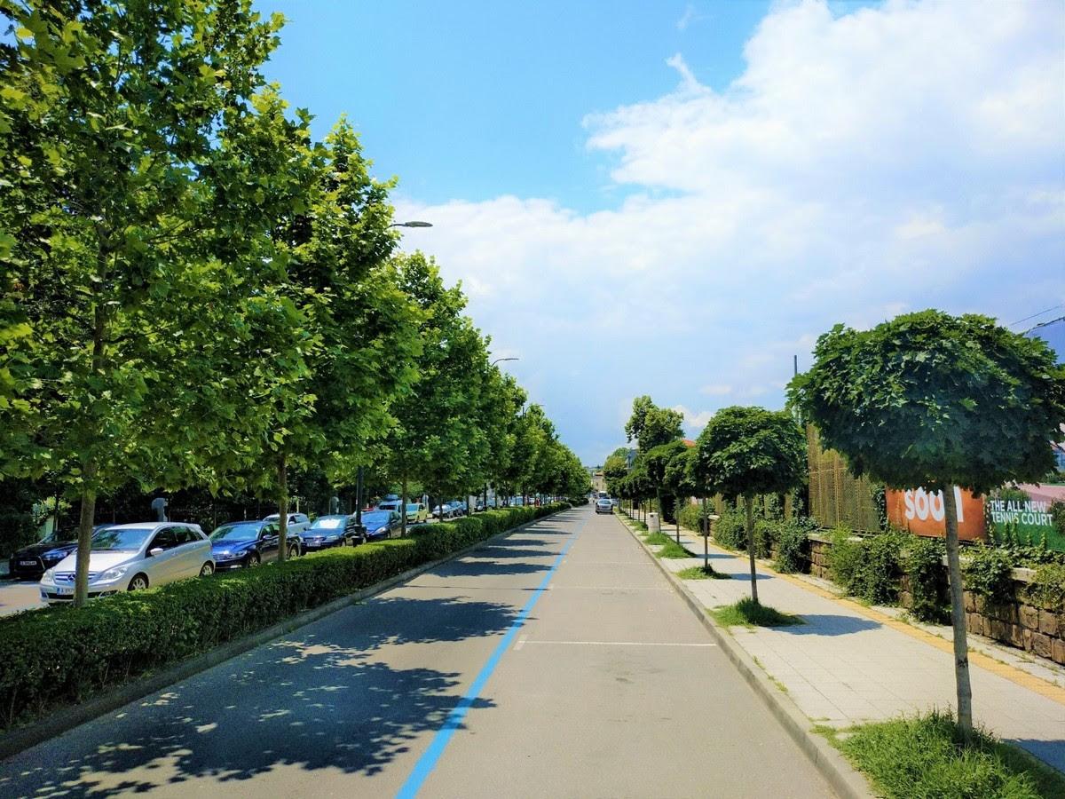 Общината засажда 200 дървета по централни улици