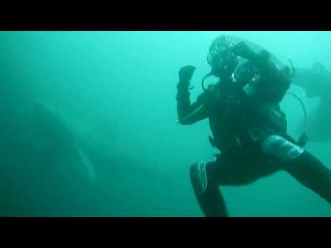 UCD Scuba Divers Epic Encounter with Basking Sharks off Mayo Coast