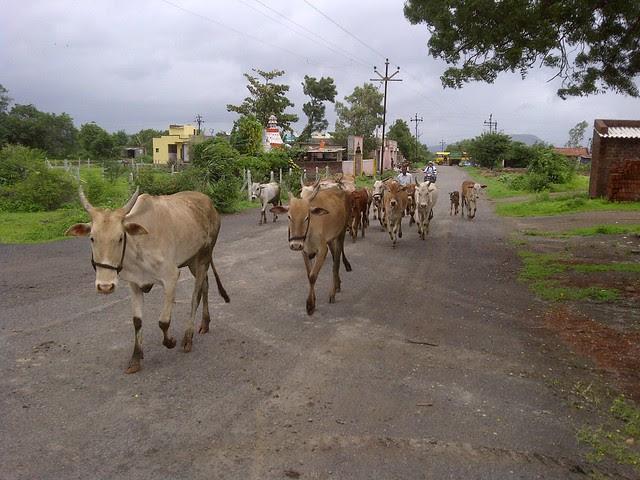 Way to Xrbia from Marunji Kasarsai Road - Nere Dattawadi, approx 7 kms from KPIT Cummins at Hinjewadi IT Park