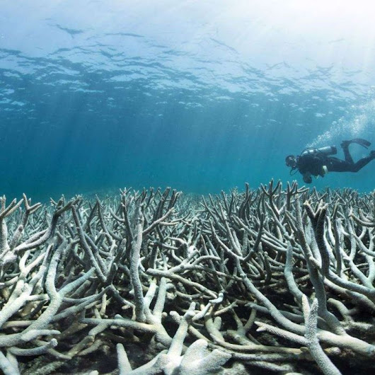 Only 10 per cent of coral reefs can be saved from extinction, scientists say