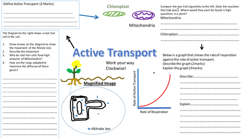 27 Cell Transport Worksheet Biology Answers - Free ...