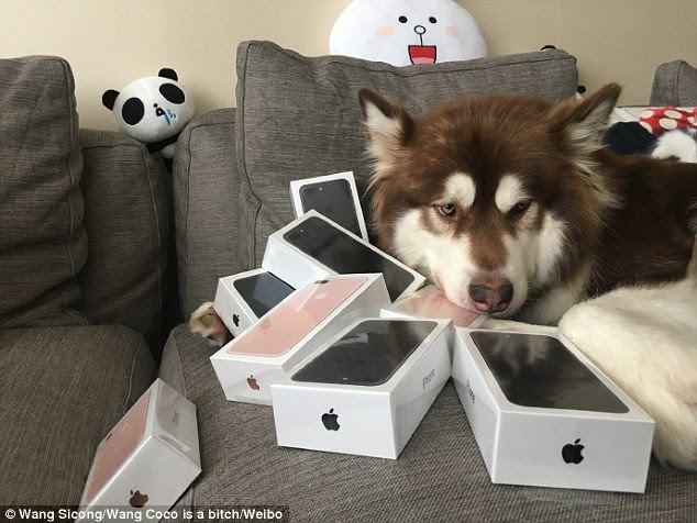 They are all mine! Pictures of the dog and her phones have attracted thousands of comments