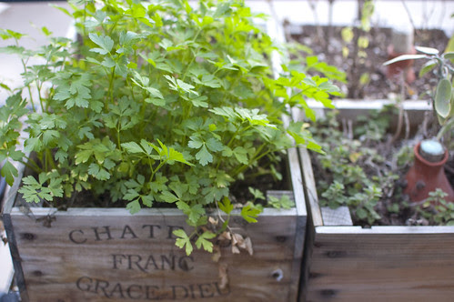 parsley, against all odds