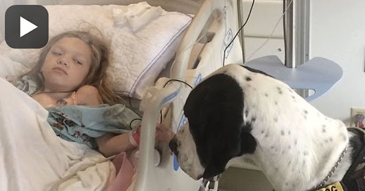 Great Dane Walks Up To Her Hospital Bed, Now Keep Yours Eyes On The Dog's Back