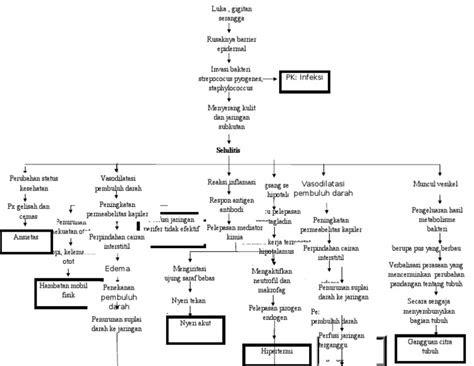 pathway selulitis