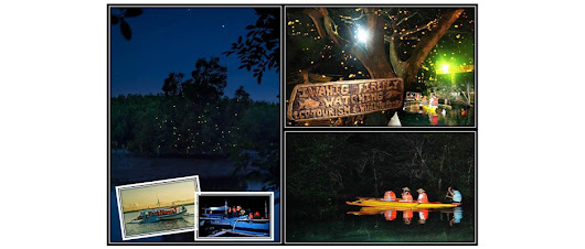 Firefly Watching - Spur Travel and Tours