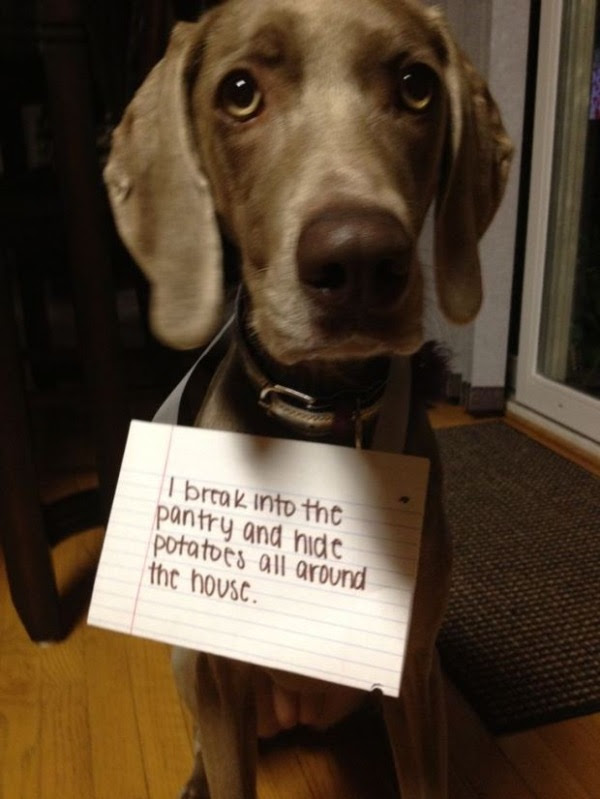 guilty-dogs-4