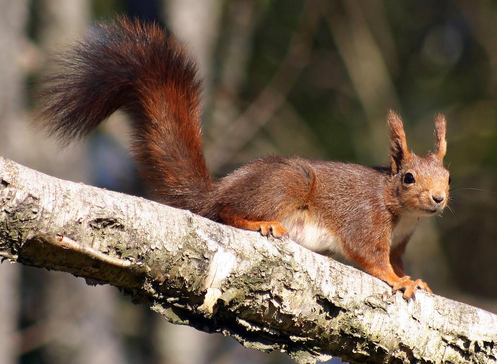 Posing Squirrel
