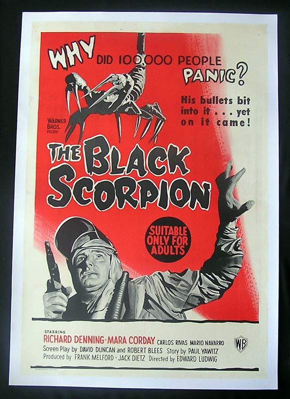 blackscorpion_australia