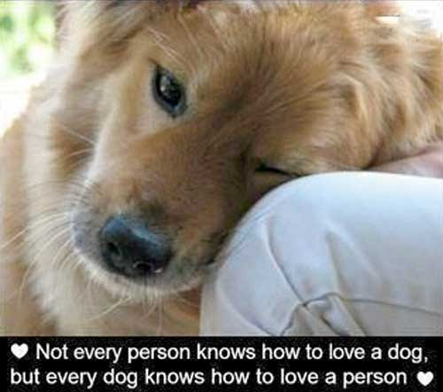 Dog Quotes Love  Quotes about Love