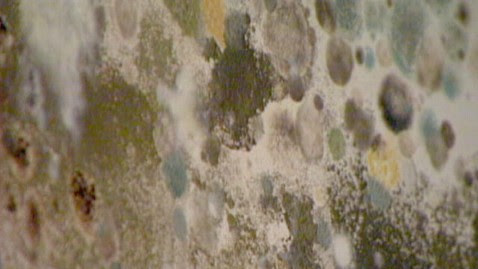 Four Tips to Protect Yourself During Mold Inspection