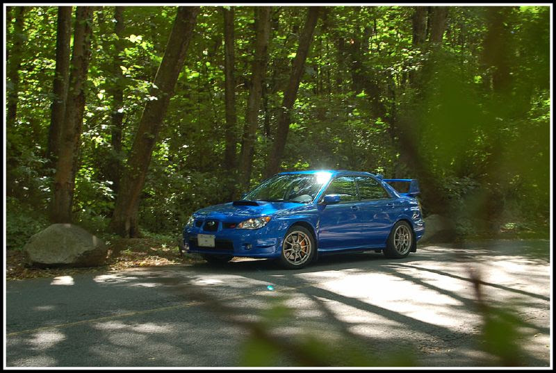STI from behind a tree