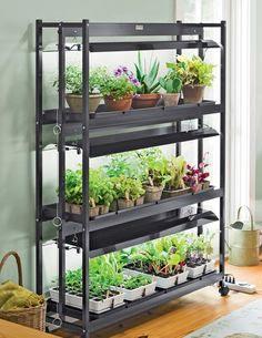 Indoor Vegetable Gardening on Pinterest