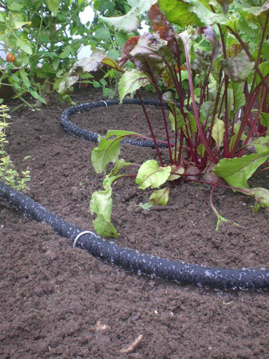 April: Tips For Watering Polytunnel Plants | Polytunnel Gardening