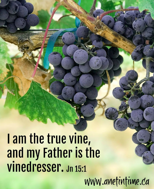 Jesus, The Vine - A Net in Time