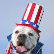 Fourth of July Safety for Pets & Horses | Oregon Veterinary Medical Association