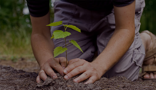 Reforestation | Earth Day Network