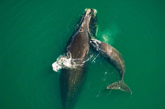 WWF Living Planet report shows 36% decline in ocean wildlife