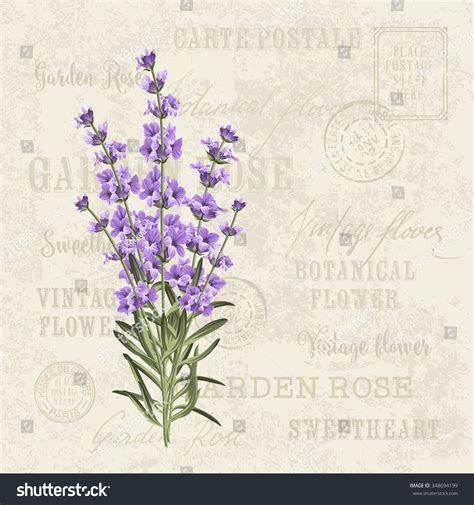 Lavender Elegant Card Vintage Postcard Background Stock