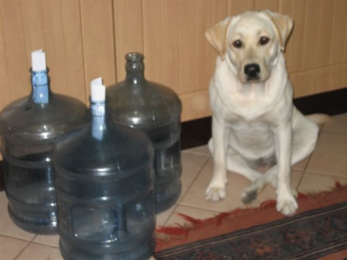 True Water Dog