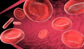 Circulación sanguínea