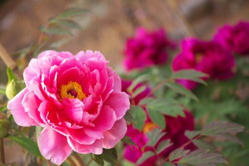 5月の花 今日も明日もチェアウォーク 楽天ブログ