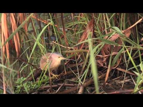 Amazing story of a wetland