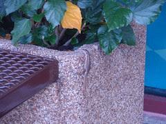 planter lizard
