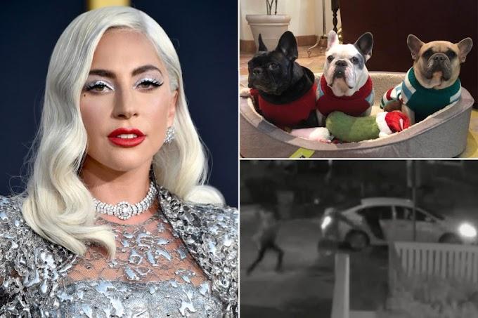Abibye imbwa za Lady Gaga bafunzwe bahamwa n'... - #rwanda #RwOT