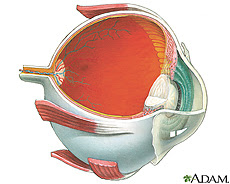 Illustration of internal eye anatomy