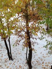 Granlibakken snow