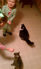 Gracie and Clara Ann giving treats to the girl cats