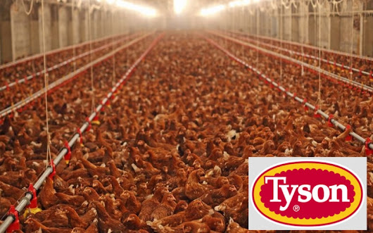 Tyson Foods Accused of Dumping More Poison to Waterways Than Exxon, Dow, Koch