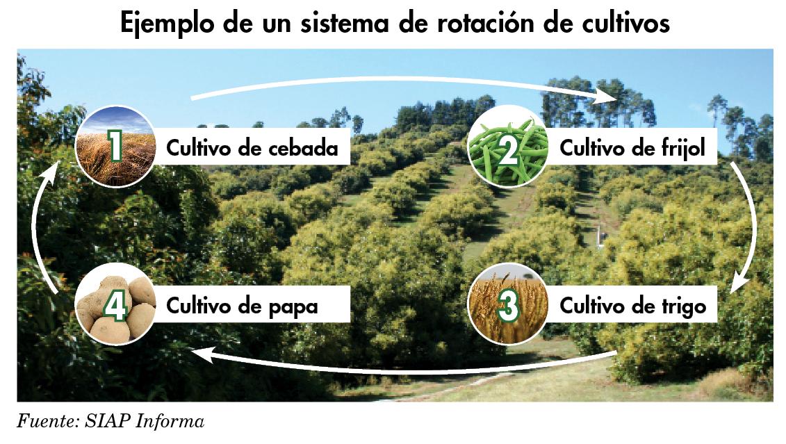 Resultado de imagen para Rotacion de cultivo
