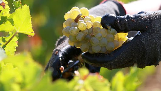 Desperate French vineyard invests in 'hail cannons' to save grapes | PropertyCasualty360