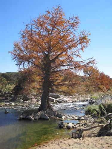 Cypress