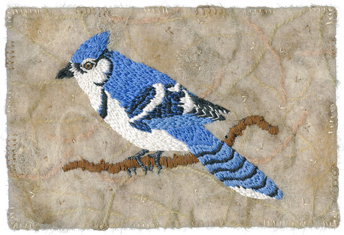 Blue Jay by Kirsten Chursinoff