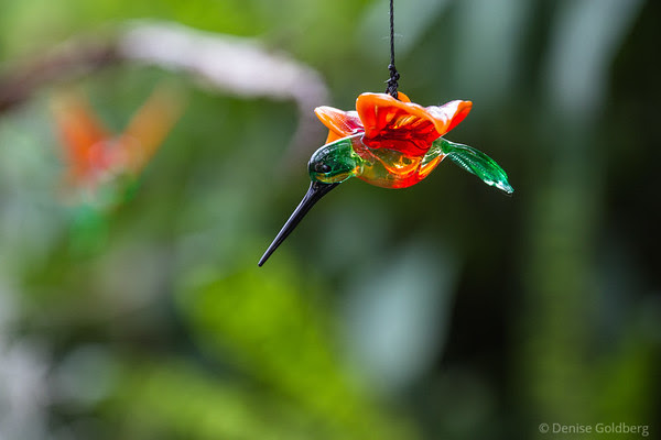 a hummingbird in glass